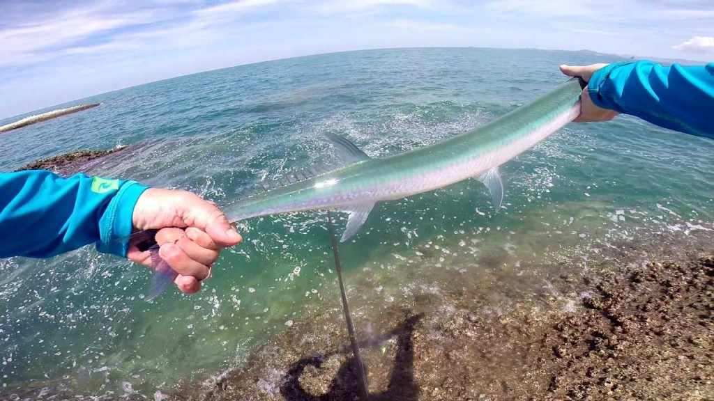 needlefish1