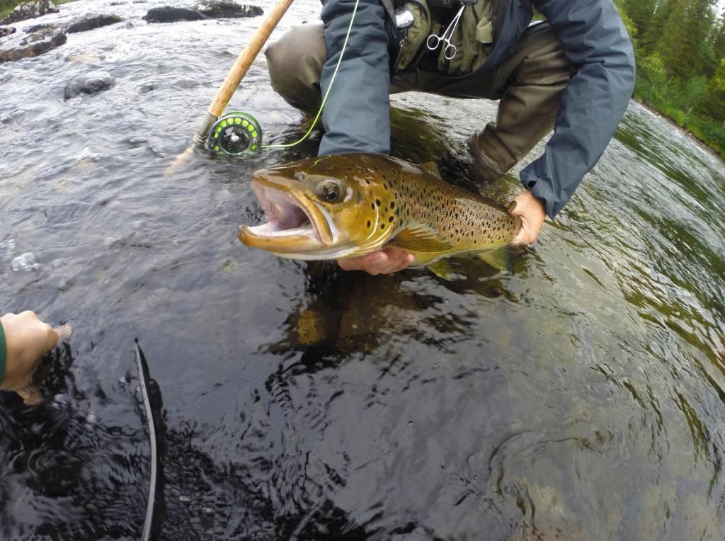 r_trout4