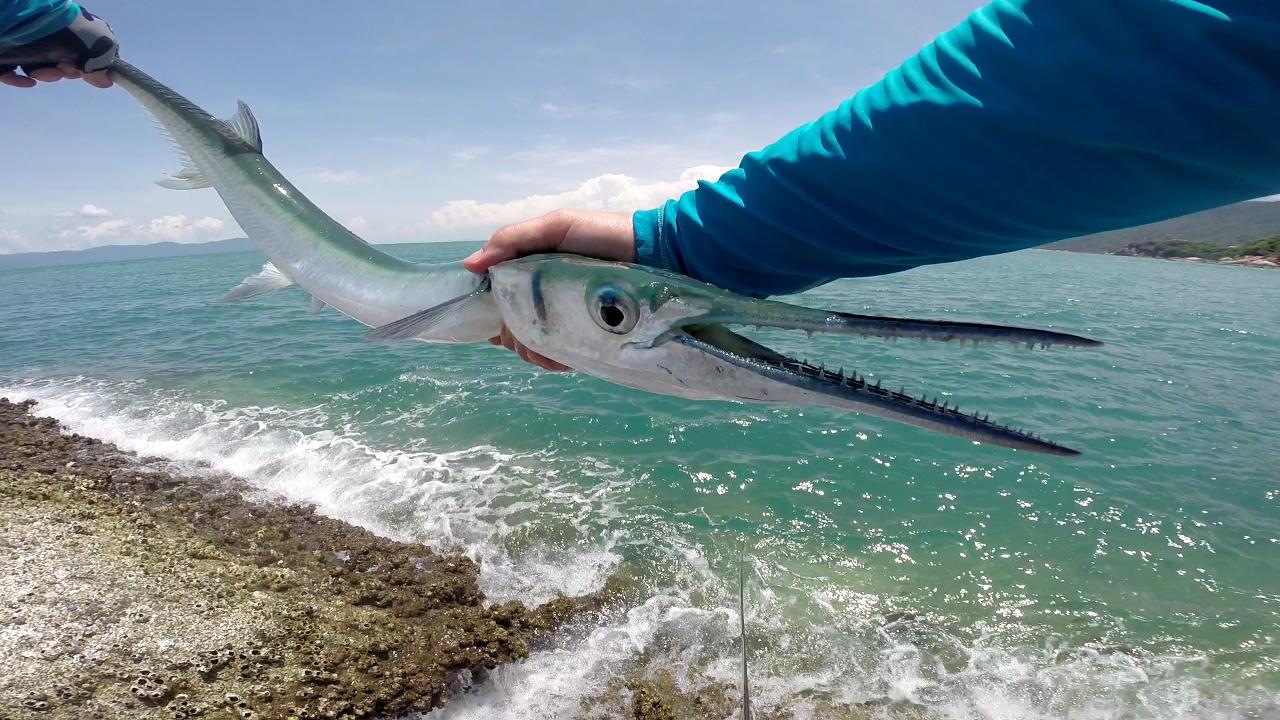 Needlefish   Thailand Fly Fishing